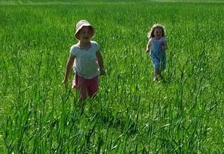 Beckley Farm field